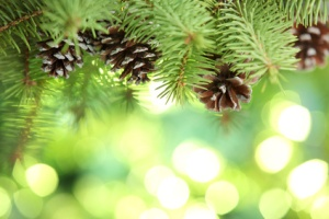 Fir branch on abstract lights background