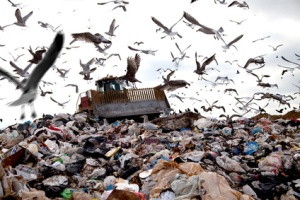 Busy landfill