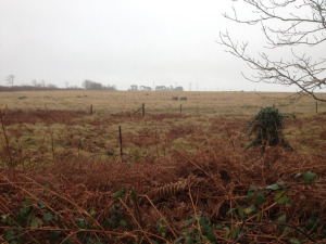rampisham-photo