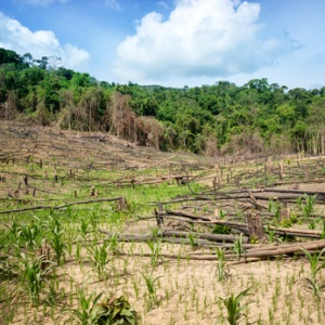 Deforestation in the Philippines