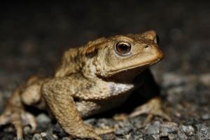 Toad, credit Erik Paterson