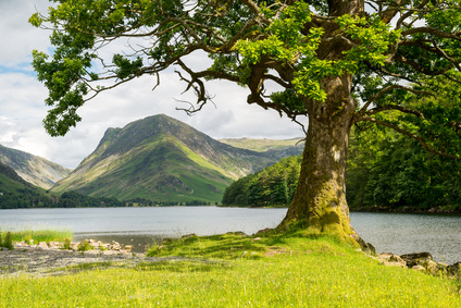 A Tree On Buttermere, Lake District. The North West part of the Lakes, simply holds beauty at its finest.