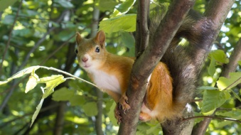 red squirrel.jpg