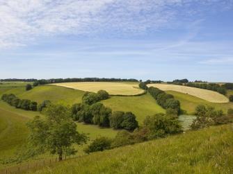 Yorkshire grazing meadows
