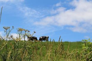 meadow-2503453_1920