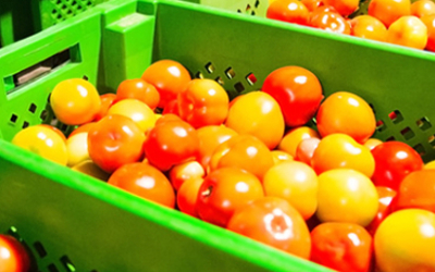 Tomatoes production line body