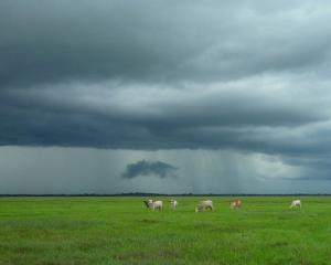 stormy farm square