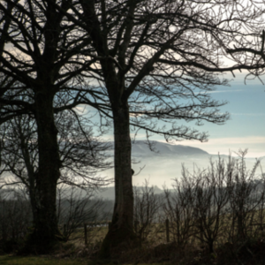 woodland small