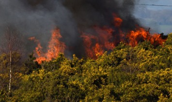 Ashdown forest fire Feb 19_Tom_Lee via Flickr_crop