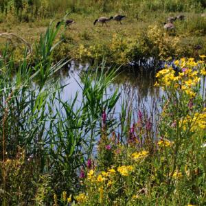 biodiversity small