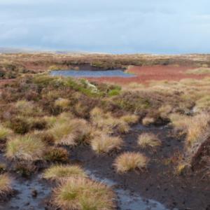 peat bog small