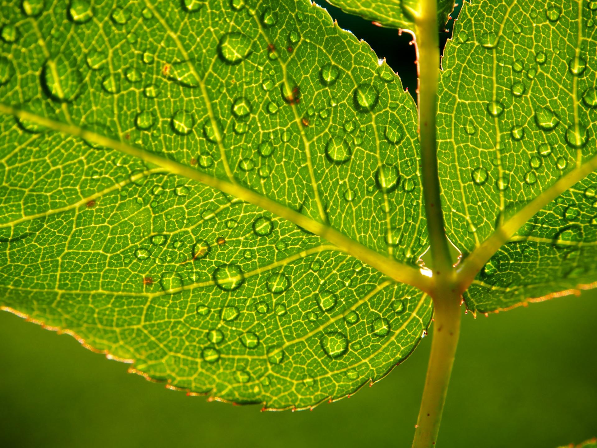 leaf-Flockine_Pixabay