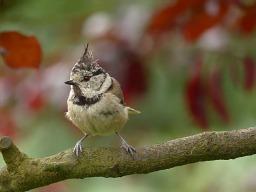 bird-2543567_1280-2