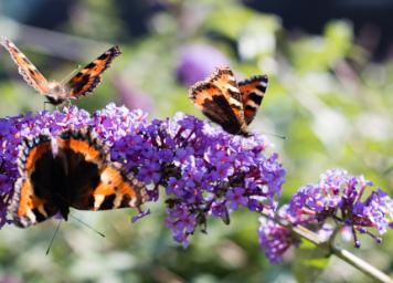 intext-butterfly-blog