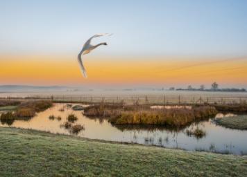 intext-wetlands-blog