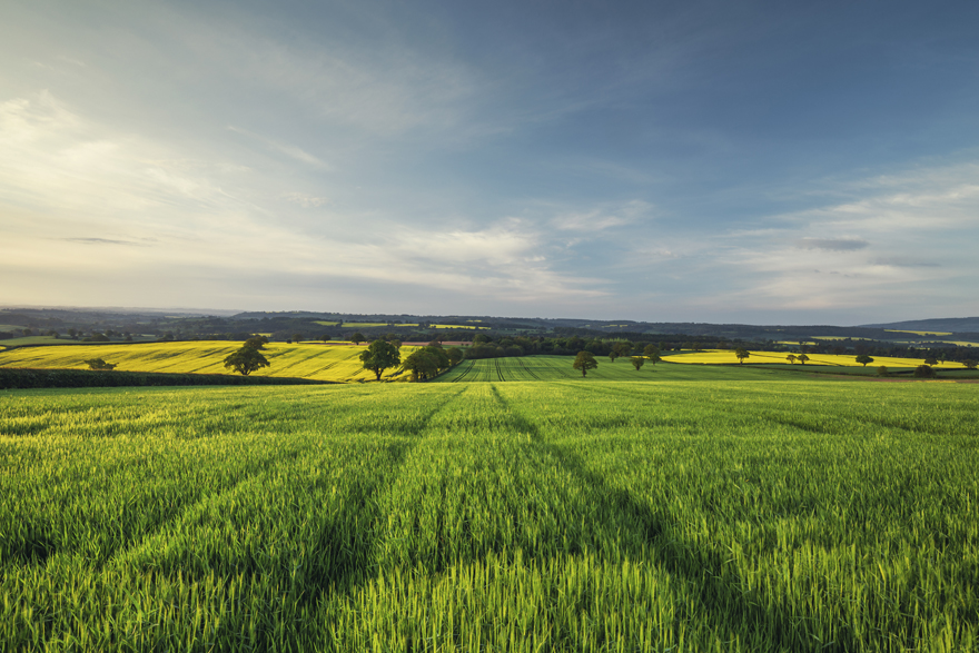 Sunrise Light over Green Wheat Field at Spring