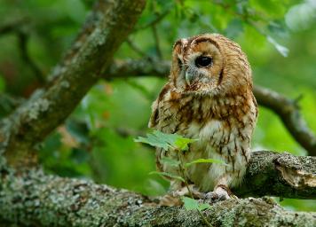 INTEXT-OWL